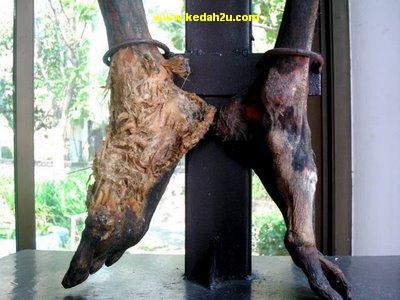 kedah2u pameran mayat di life museum thailand kisah
