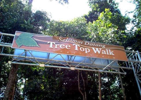 Tree top walk sungai sedim, kulim kedah
